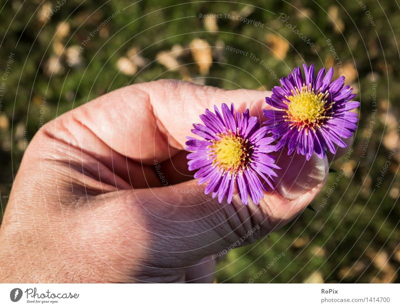 Nature Plant Flower Relaxation Hand Environment Blossom Love Autumn Meadow Garden Moody Park Contentment Weather Skin