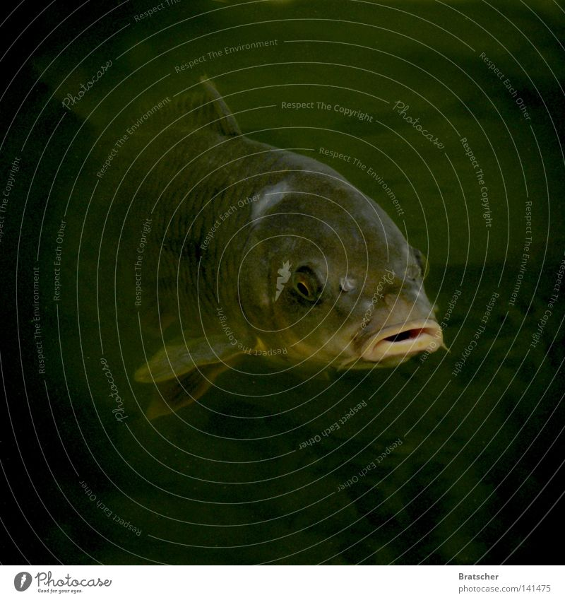 Water Old Ocean Calm Black Eyes Dark Lake Fear Fish River Film industry Creepy Panic Muzzle Murder