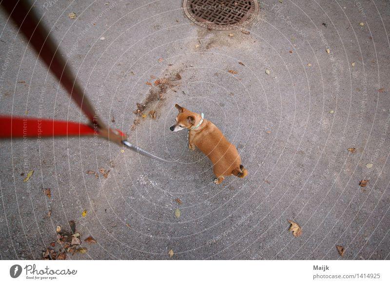 Dog White Red Animal Joy Black Street Life Small Gray Brown Going Friendship Authentic String Serene