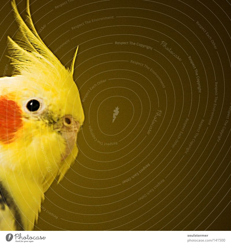 Beautiful Red Eyes Yellow Colour Freedom Head Brown Bird Flying Feather Discover Captured Vignetting Placeholder