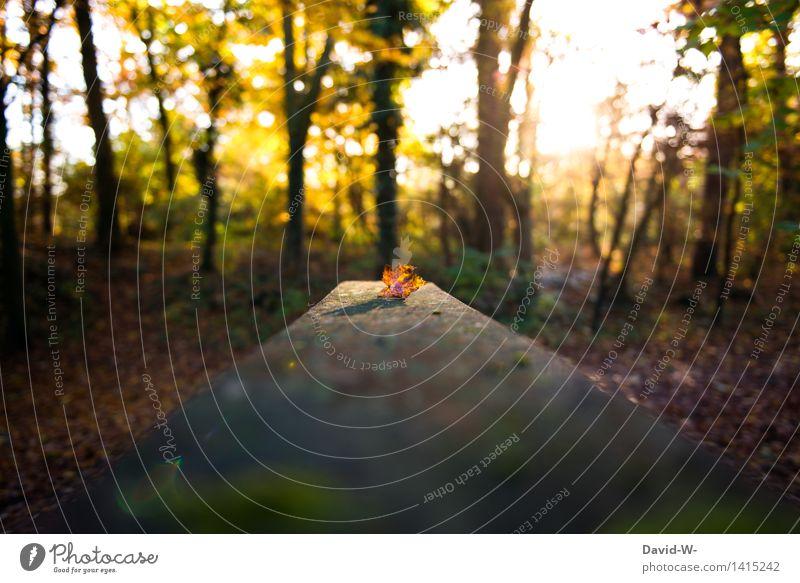 Nature Beautiful Sun Loneliness Landscape Leaf Winter Cold Environment Autumn Emotions Brown Moody Orange Elegant Energy