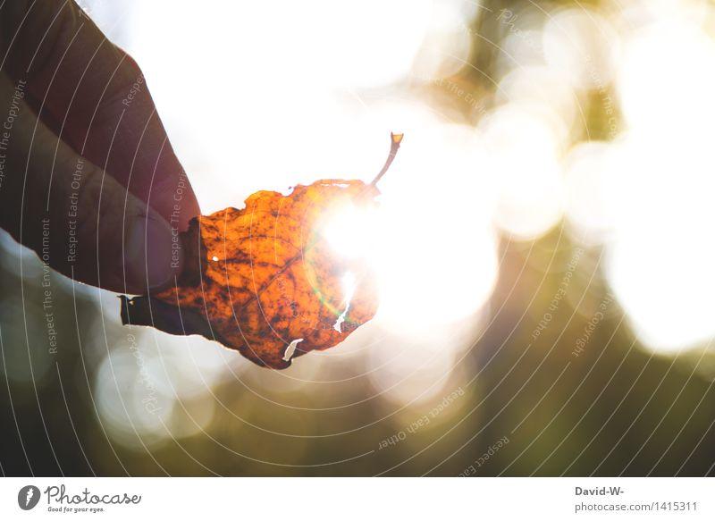 autumn lights Lifestyle Elegant Human being Hand Fingers 1 Art Work of art Environment Nature Landscape Plant Elements Air Sun Sunrise Sunset Sunlight Autumn