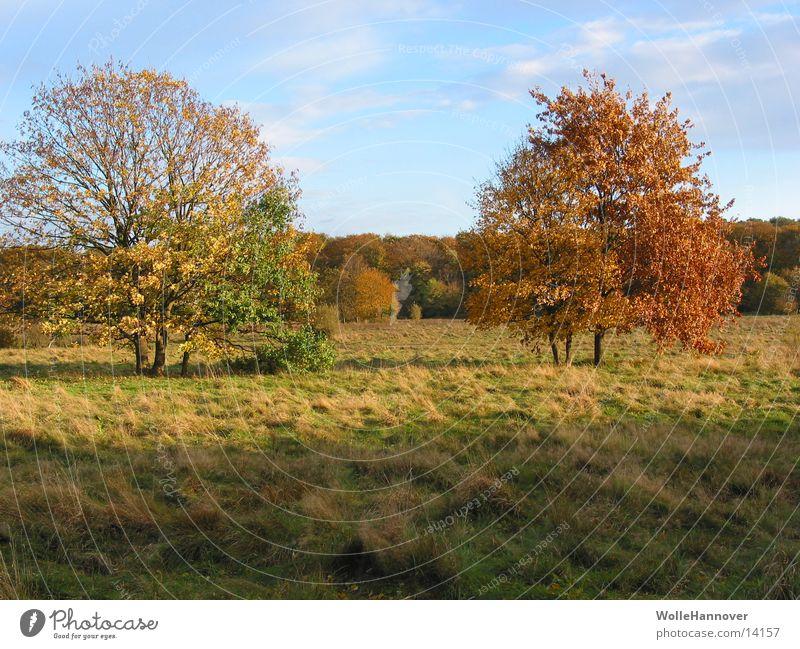 Autumn 2002 Leaf Play of colours Sun Blue sky