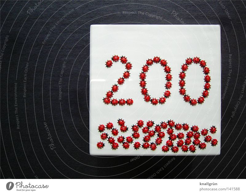 200 - WE ARE JUST THE BEGINNING! Ladybird Spotted Digits and numbers Beetle Animal Insect Plastic Jubilee Square White Gray Red Black Obscure two hundred