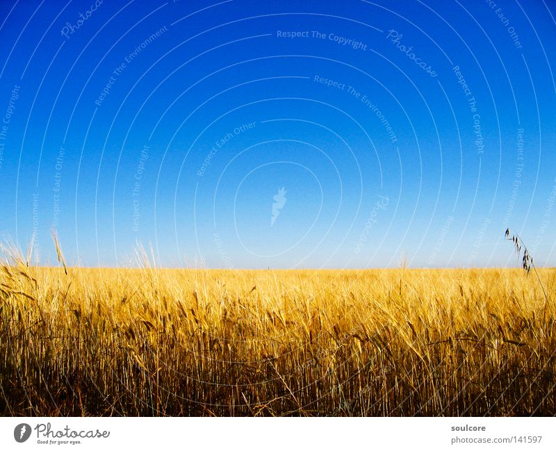 Sky Blue Yellow Colour Field Horizon Grain Agriculture Spain Cornfield