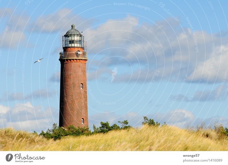 Blue Green Yellow Architecture Coast Gray Brown Bird Large Tall Beautiful weather Baltic Sea Manmade structures Dune Seagull Tourist Attraction