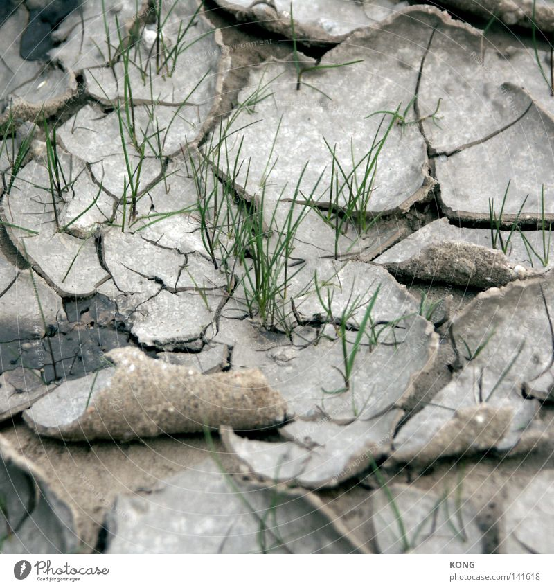 Nature Green Plant Life Meadow Spring Sand Earth Dirty Beginning Earth Dry Blade of grass To break (something) Refreshment Real estate