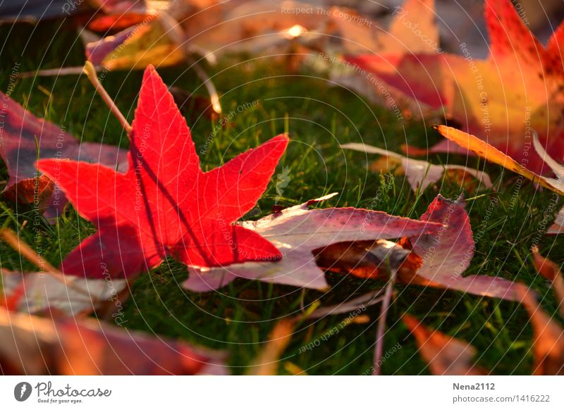 Nature Tree Red Leaf Animal Forest Environment Autumn Meadow Grass Garden Park Weather Field Earth Climate