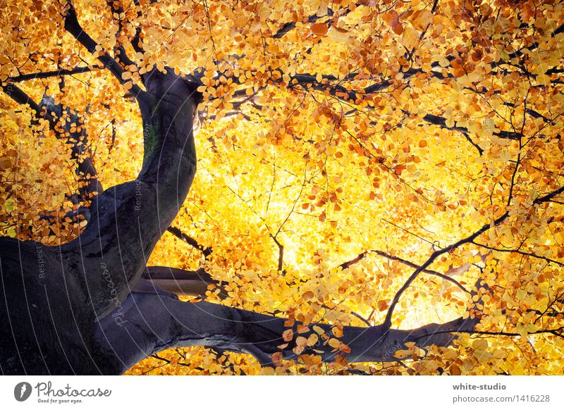Nature Plant Tree Animal Environment Warmth Autumn Orange Gold Esthetic Poverty Warm-heartedness Beautiful weather Change Seasons Tree trunk