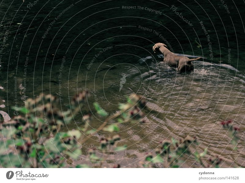 Water Green Plant Summer Animal Dark Dog Waves Wet Swimming & Bathing River Pelt Animalistic Deep River bank Mammal