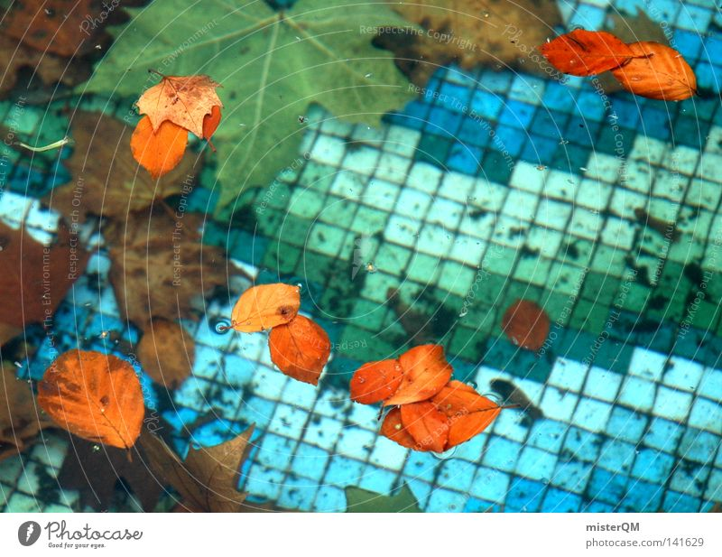 Off-season. Ravages of time Tile Blue Water Leaf Autumn Timeless Contrast Physics Cold Bathroom Open-air swimming pool Transience Past Maple leaf Death Life