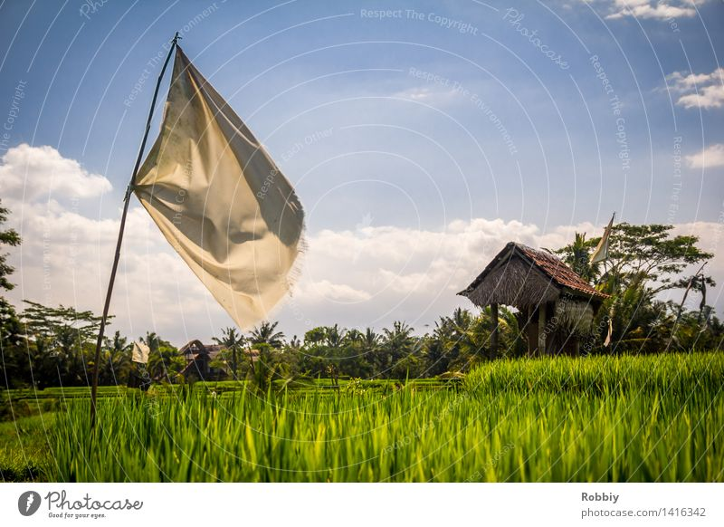 Where the sack of rice falls over Workplace Agriculture Forestry Landscape Paddy field Rice Field Flag Hut Natural Performance Food Extend Country  garden Farm