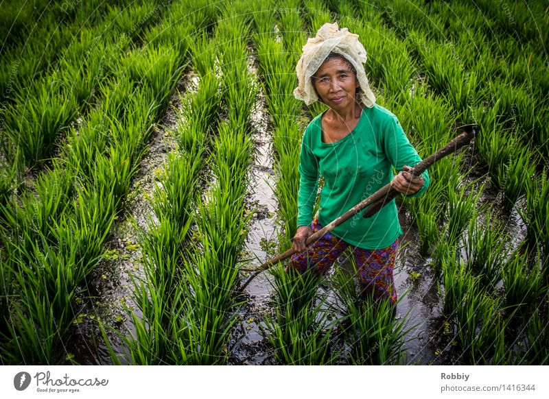 rice farmer Farmer Working in the fields Agriculture Forestry Feminine Woman Adults 1 Human being 45 - 60 years 60 years and older Senior citizen Field