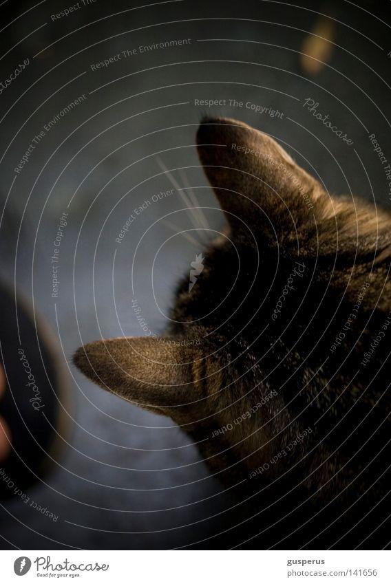 Cat Animal Emotions Weather Ear Listening Mammal Domestic cat Senses Spoon Discern Purr Scythe
