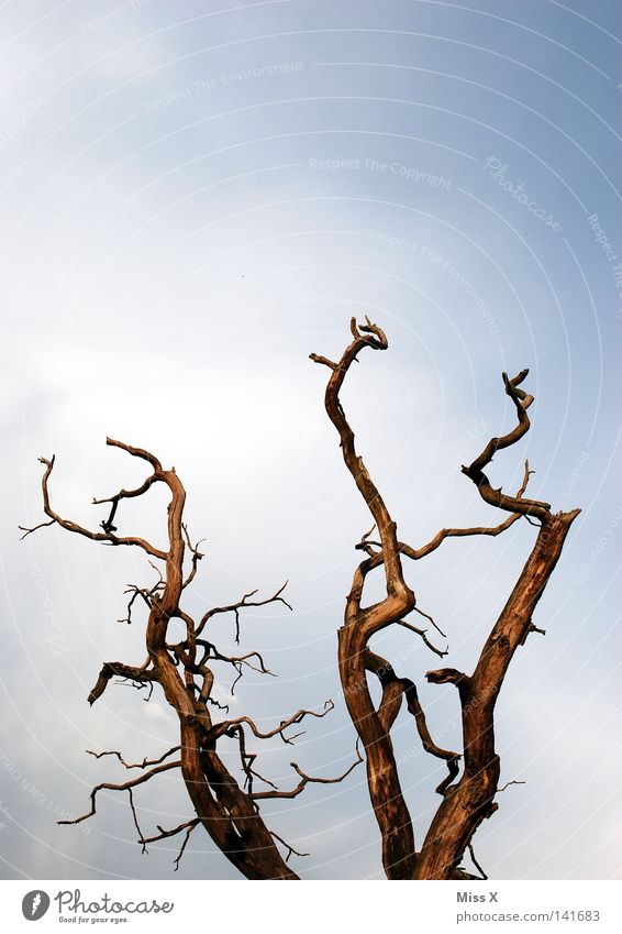 Nature Sky Tree Blue Clouds Life Death Brown Environment Gloomy End Branch Decline Past Twig Environmental pollution