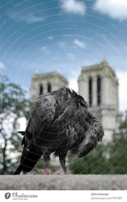 the revolution eats its children Pigeon Headless Notre Dame Paris France Florence Clouds Blue Bridge Pont du Carrousel Landmark Monument Bird