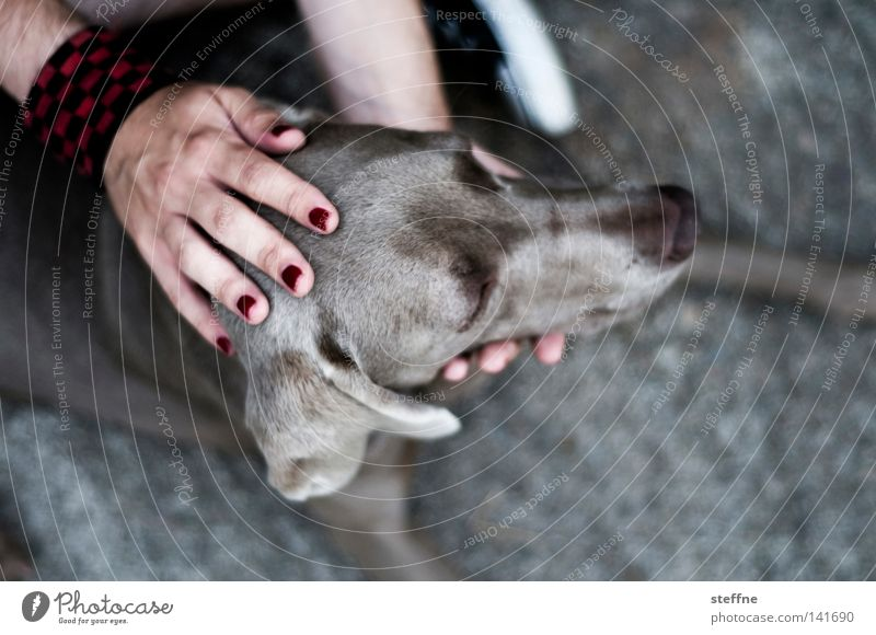 Human being Hand Animal Dog Cute Listening Mammal Fingernail Snout Cuddling Caress Love of animals Hound Wauwau
