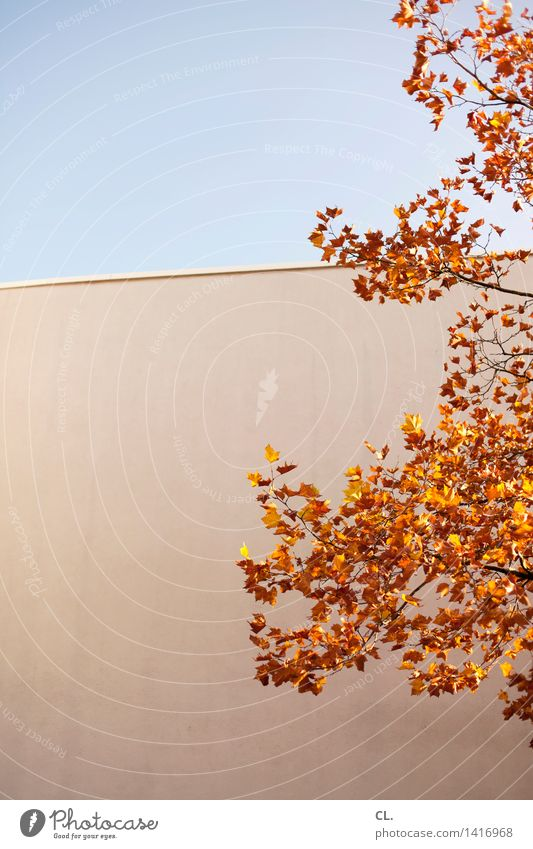 Golden October Environment Nature Sky Cloudless sky Autumn Beautiful weather Tree Leaf Wall (barrier) Wall (building) Colour photo Exterior shot Deserted