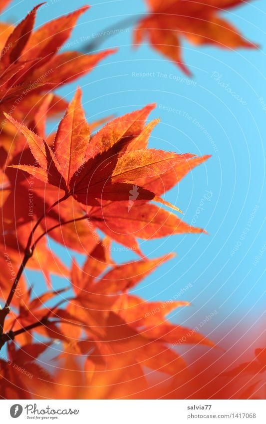 towards the sun Environment Nature Animal Sky Sun Autumn Tree Leaf Autumnal colours Maple branch Park Illuminate Esthetic Blue Orange Warm-heartedness Design