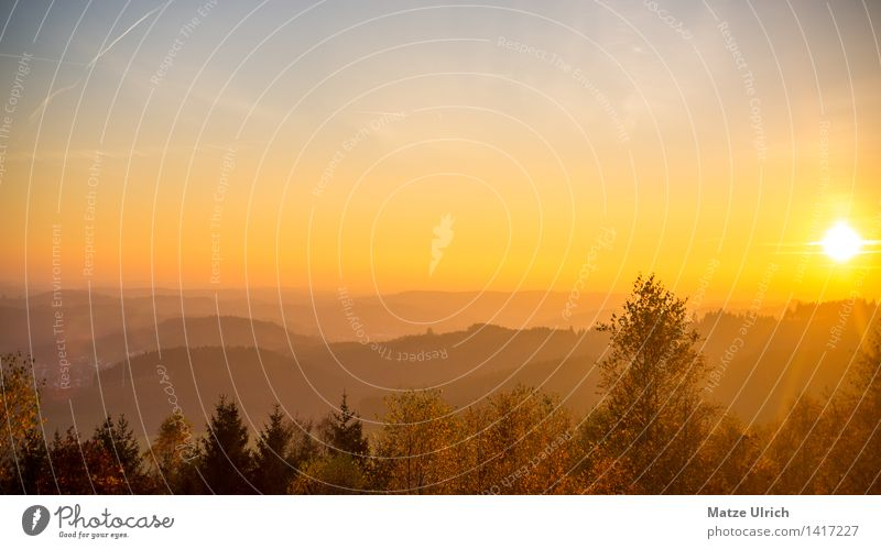 Evening Sun Oberberg Environment Nature Landscape Sky Cloudless sky Sunrise Sunset Sunlight Spring Summer Autumn Weather Beautiful weather Warmth Tree Forest