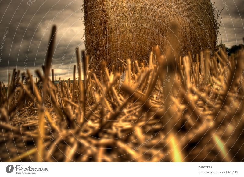 Sky Summer Clouds Yellow Small Gold Perspective Floor covering Threat Agriculture HDR Straw Bale of straw
