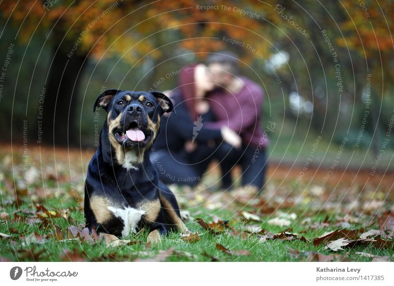 Human being Dog Youth (Young adults) Tree Relaxation Animal 18 - 30 years Adults Autumn Emotions Meadow Happy Couple Together Park Authentic