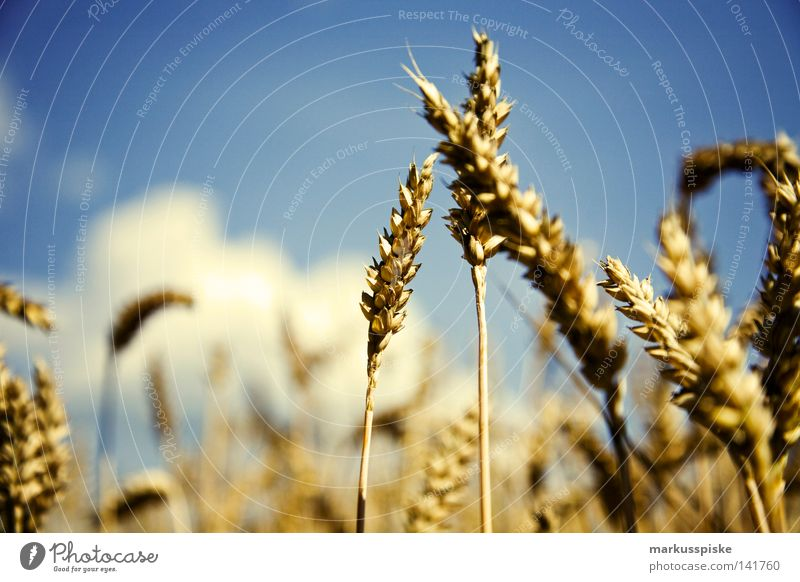 Nature Sky Plant Summer Nutrition Meadow Landscape Field Food Change Grain Agriculture Appetite Seasons Harvest