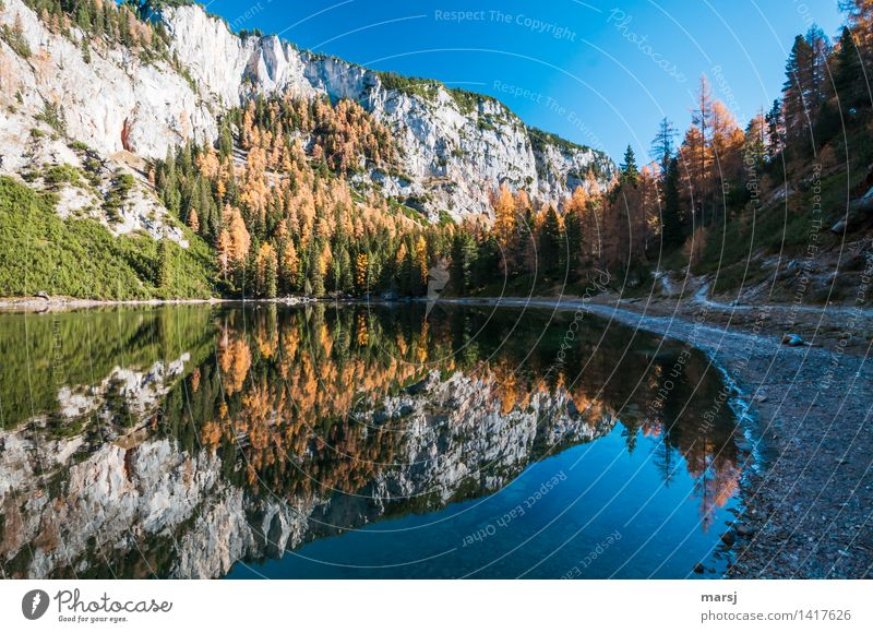 A hell of a fall! Harmonious Relaxation Calm Meditation Vacation & Travel Tourism Trip Adventure Mountain Hiking Nature Landscape Cloudless sky Autumn Tree