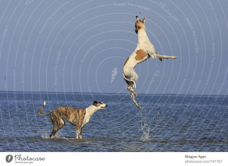 Joy Mammal Racing sports Dog racing Animal training Greyhound racing