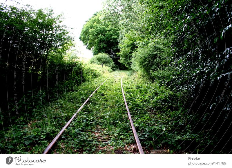 overgrown Railroad tracks Forest Growth Vanished Nature Leaf Green Cave Parallel Line Bushes Grass Branchage Twigs and branches Tree trunk Wood Doomed