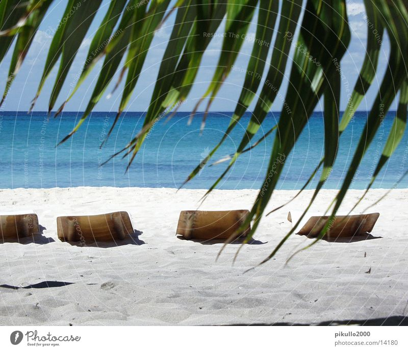 Stranddomrep Beach Palm tree Island Water