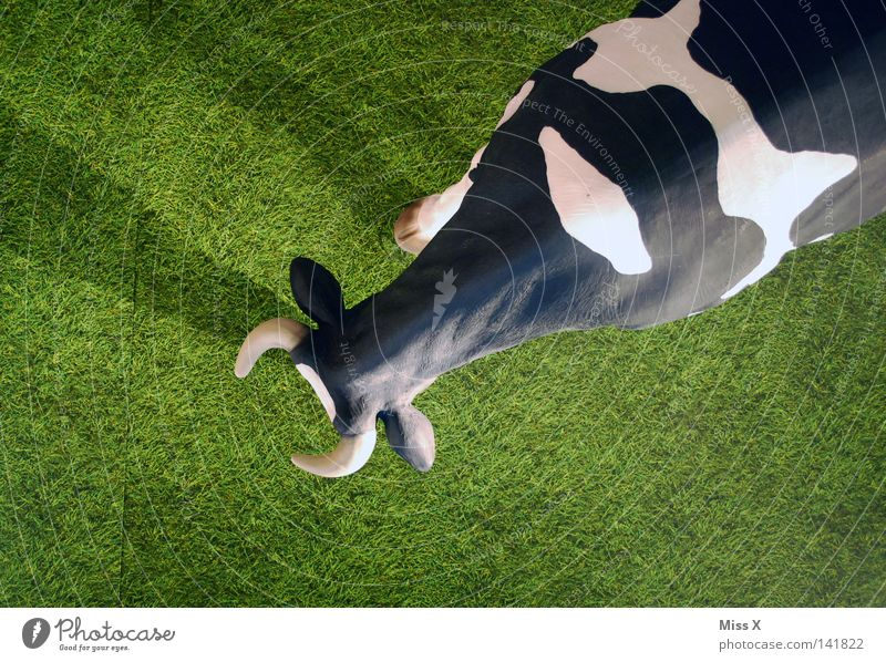 White Green Black Above Grass Large Lawn Observe Under Statue Cow Pasture Mammal False Antlers Bull