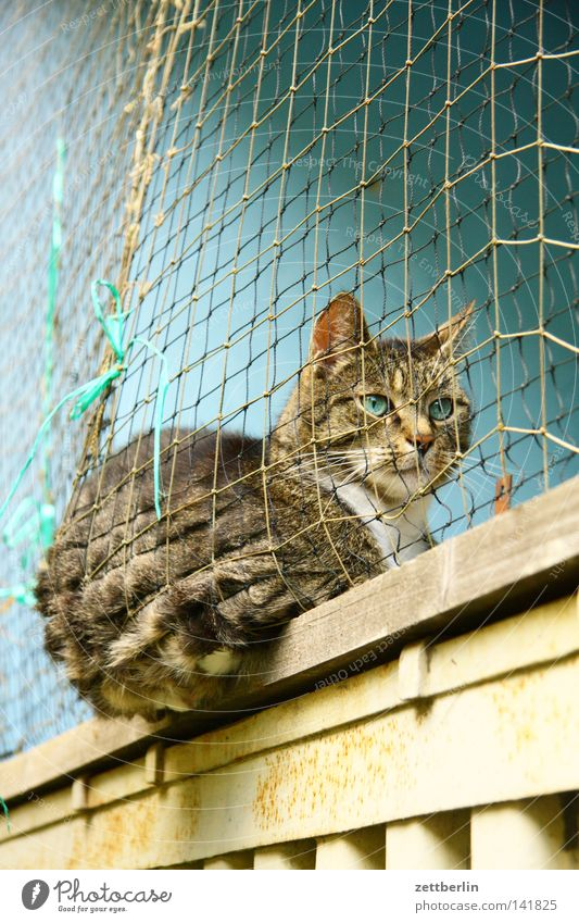 Calm Animal Relaxation Cat Sit Break Net Protection Living or residing Pelt Colour Captured Mammal Pet Domestic cat Exclude