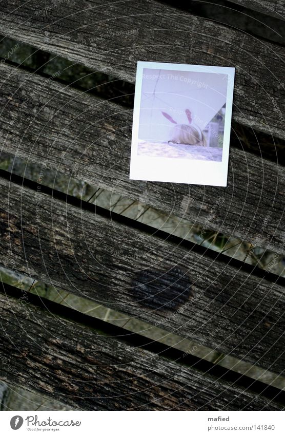 Old White Red Wood Gray Stone Brown Pink Photography Eyeglasses Bench Umbrella Polaroid Hare & Rabbit & Bunny Weathered Hare ears