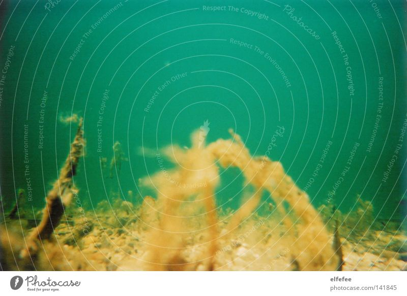 underwater world. Ocean Lake Water Underwater photo Algae Bottom of the sea Plant Dive Analog Lomography Yellow Green Blue Vacation & Travel Relaxation Beach