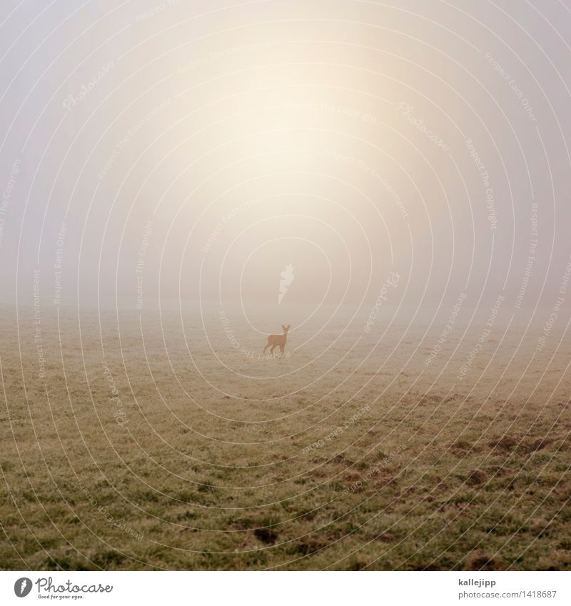 Nature Plant Sun Landscape Animal Baby animal Environment Autumn Meadow Field Fog Wild animal Stand Drops of water Agriculture Escape
