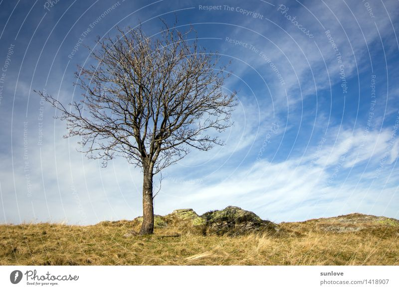 Beautiful lonely tree on the hill Environment Nature Landscape Plant Sky Clouds Sun Sunlight Autumn Climate Weather Tree Wild plant Field Hill Breathe Think