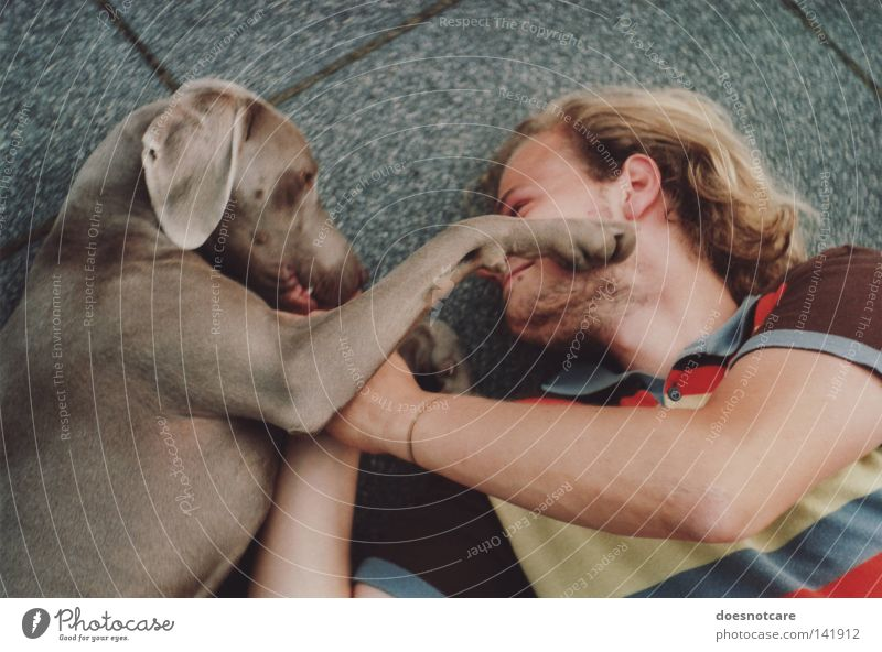 Peace, joy, dog biscuits. Joy Playing Man Adults Animal Pet Dog Paw To enjoy Cute Love of animals Weimaraner Affection Animal protection Analog Hound Mammal