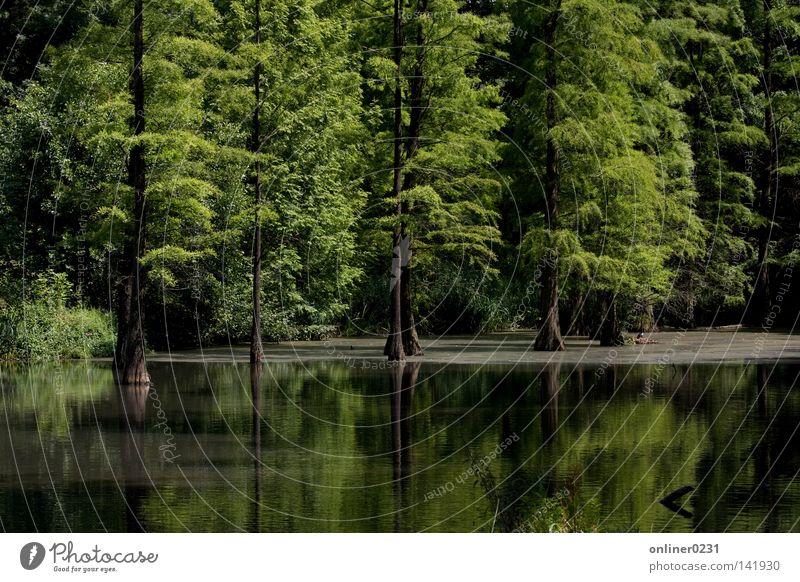 idyllic Lake Forest Pond Tree Reflection Dortmund Park Spring Romberg Park canon