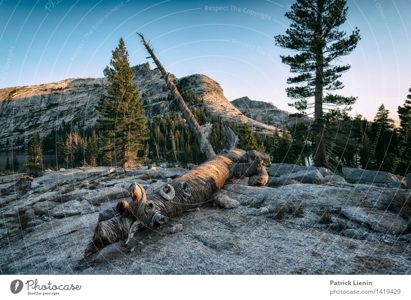 Yosemite National Park Life Harmonious Well-being Contentment Senses Relaxation Calm Meditation Vacation & Travel Tourism Adventure Far-off places Freedom