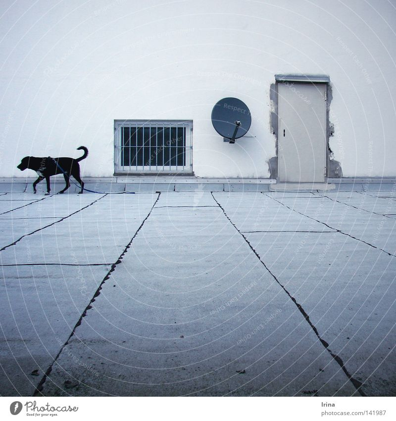 "<font color=""#ffff00"">-=I´ve=- sync:ßÇÈâÈâ Living or residing Television Window Door Satellite dish Dog Black White Loneliness Roof terrace Grating"
