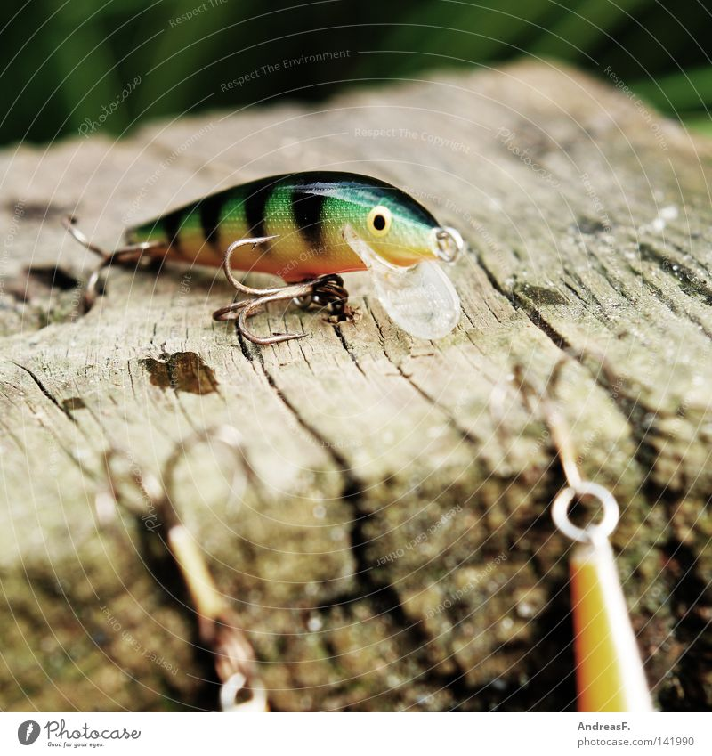 Nature Leisure and hobbies Fish Plastic Catch Fishing (Angle) Deception Angler Checkmark Spoon bait Perches Pike Spinner Imitate Predatory fish Good luck fishing!
