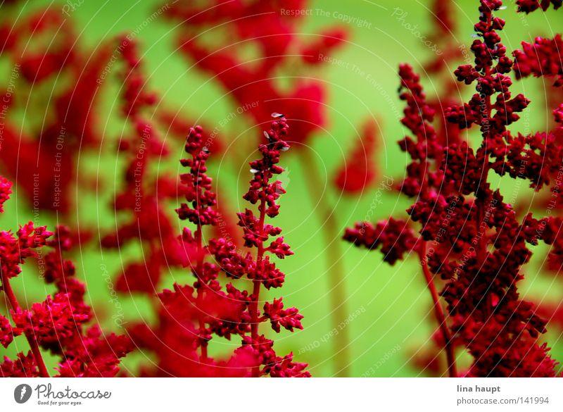 Nature Flower Green Red Meadow Bushes Flowerpot