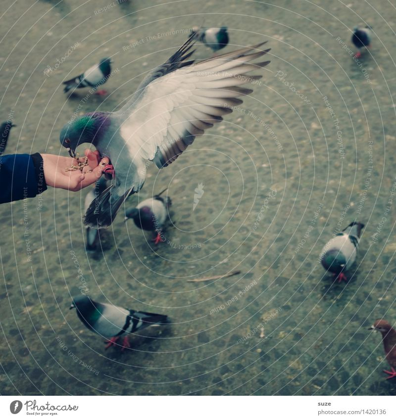 Better the dove in the hand ... Joy Leisure and hobbies Arm Hand Animal Places Marketplace Street Bird Pigeon Group of animals Flying Feeding Free Wild Gray