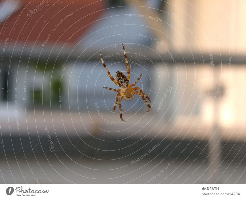 House (Residential Structure) Roof Net Balcony Spider