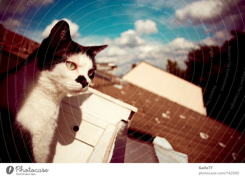 outlook Cat Looking Roof House (Residential Structure) Relaxation To enjoy Air Mammal fin Finnish Observe Freedom