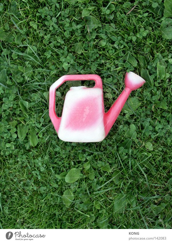 sunburn Jug Watering can Cast Bleached UV radiation Sunlight Pallid Meadow Lawn Grass Blade of grass Middle Central Red Pink Green Decoration Craft (trade)