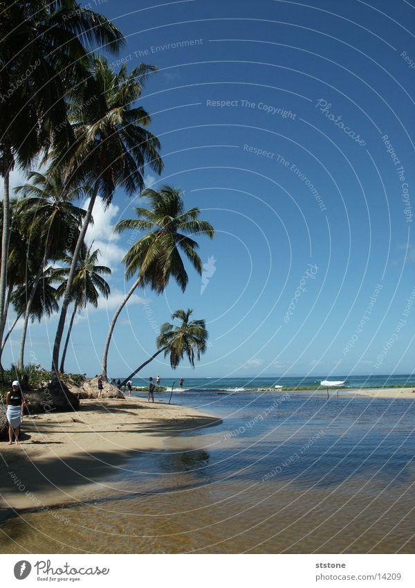 palm beach Palm tree Beach Punta Cana Ocean Cuba Sand Water Blue sky