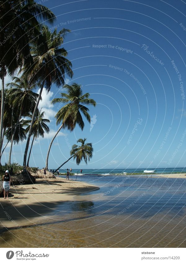Water Ocean Beach Sand Cuba Palm tree Dominican Republic Blue sky Punta Cana