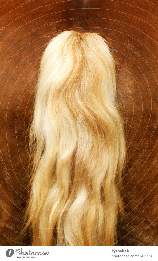 Animal Hair and hairstyles Blonde Horse Bottom Hind quarters Mammal Tails